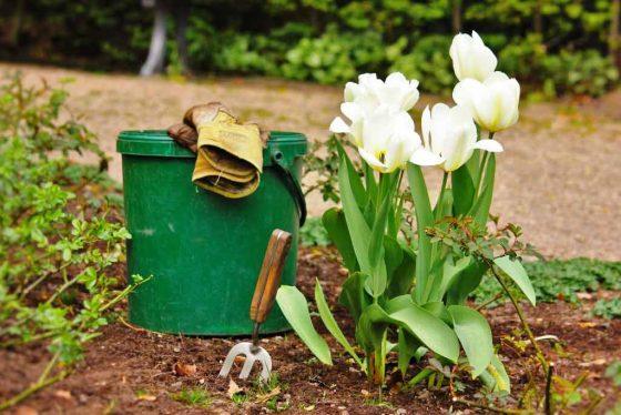 Ob Gemüse, Obst oder Blumen - mit einer vielfältigen Auswahl an Kräutern, Sträuchern und sogar Bäumen können Sie etwas Farbe in Ihren Garten bringen. copyright: pixabay.com