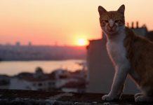 """Kino aus der Katzen-Perspektive: """"KEDI – Von Katzen und Menschen"""" - Mit großem CityNEWS-Gewinnspiel! - copyright: Weltkino Filmverleih"""