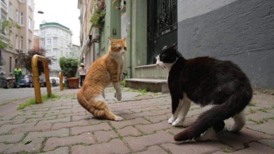 Mit Katzen-Kameras ganz nah auf Großstadt-Safari - copyright: Weltkino Verleih