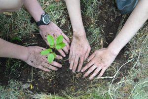 """""""Plant-for-the-Planet""""-Akademie: Pflanze deinen eigenen Baum!"""