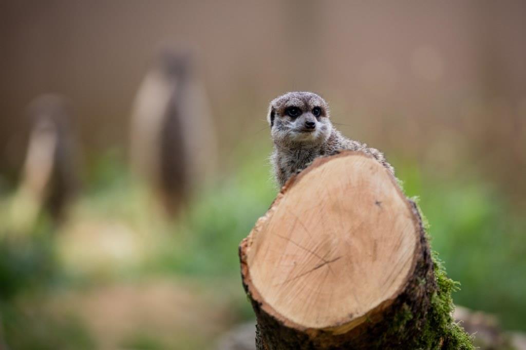 Beim Kölner Zootag gibt es viel zu Entdecken - copyright: CityNEWS / Alex Weis