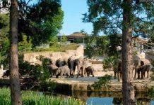 Kölner Zoo öffnet mit strengen Auflagen endlich wieder! copyright: Rolf Schlosser / Kölner Zoo