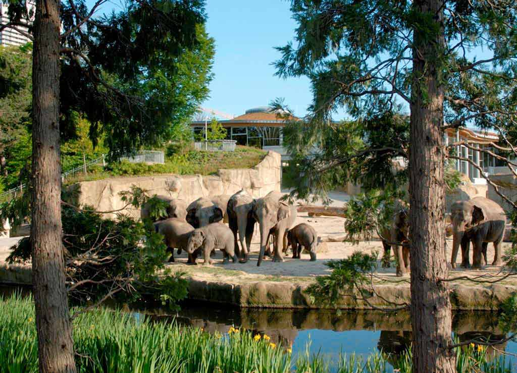 Rund 10.000 Tiere und 850 unterschiedliche Arten ziehen die durchschnittlich mehr als 1,1 Millionen Besucher pro Jahr in ihren Bann. copyright: Kölner Zoo