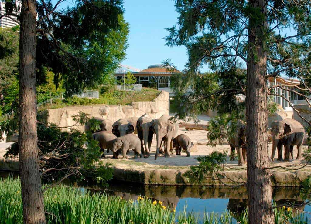 Der Kölner Zoo ist ab sofort wegen des Coronavirus geschlossen. copyright: Kölner Zoo
