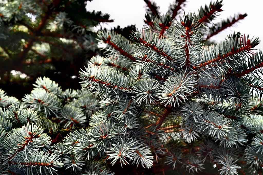 Erlebnis Weihnachtswald - copyright: pixabay.com