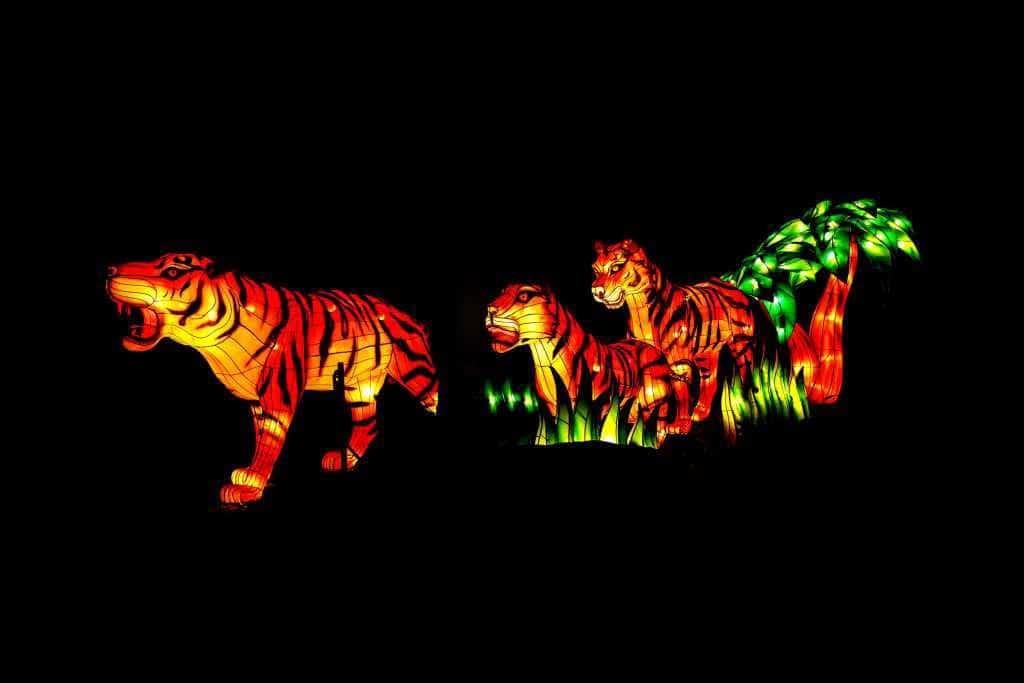 Vom 24.11.2017 bis 06.01.2018 findet im Kölner Zoo das China Light Festival statt - eines der größten Licht-Events, die Köln je erlebt hat! copyright: Kölner Zoo / MünsterView/ Witte