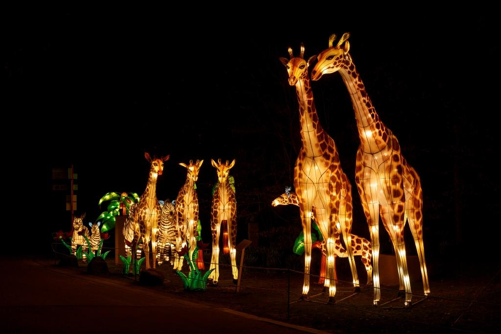 gro es china light festival sorgt f r strahlende momente im k lner zoo. Black Bedroom Furniture Sets. Home Design Ideas
