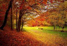 Köln im Herbst: Die schönsten Fotomotive copyright: pixabay.com