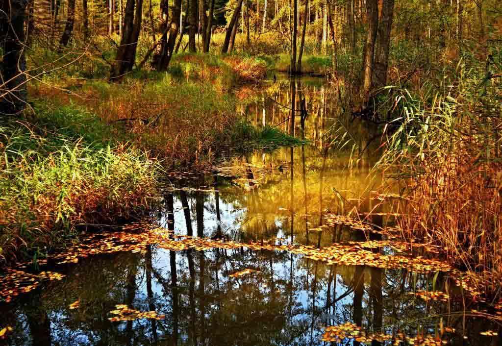Großartige Herbst-Naturaufnahmen gelingen zum Beispiel an den Kölner Weihern. copyright: pixabay.com