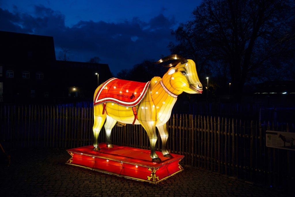 """Beim China Light Festival im Kölner Zoo gibt es auch einen """"erleuchteten"""" Hennes zu sehen! copyright: CityNEWS"""