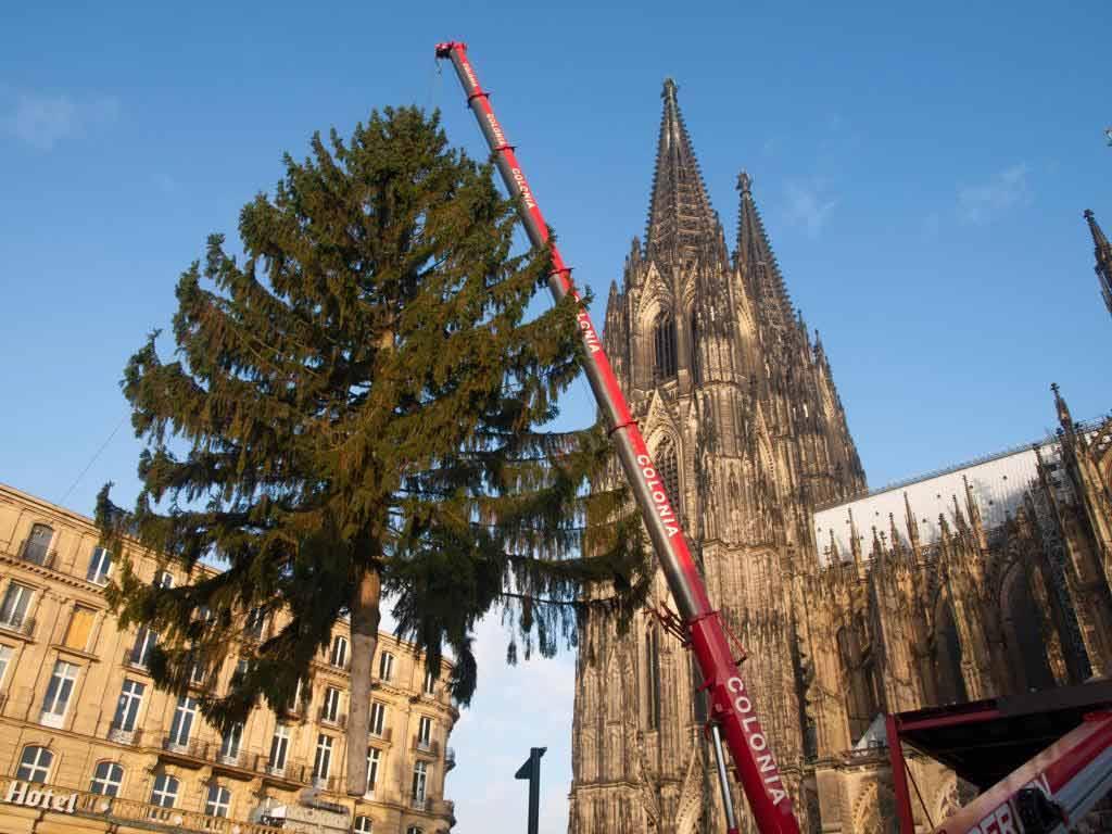 Die imposante Fichte ist etwa 70 Jahre alt und 28 Meter hoch. copyright: www.koelnerweihnachtsmarkt.com