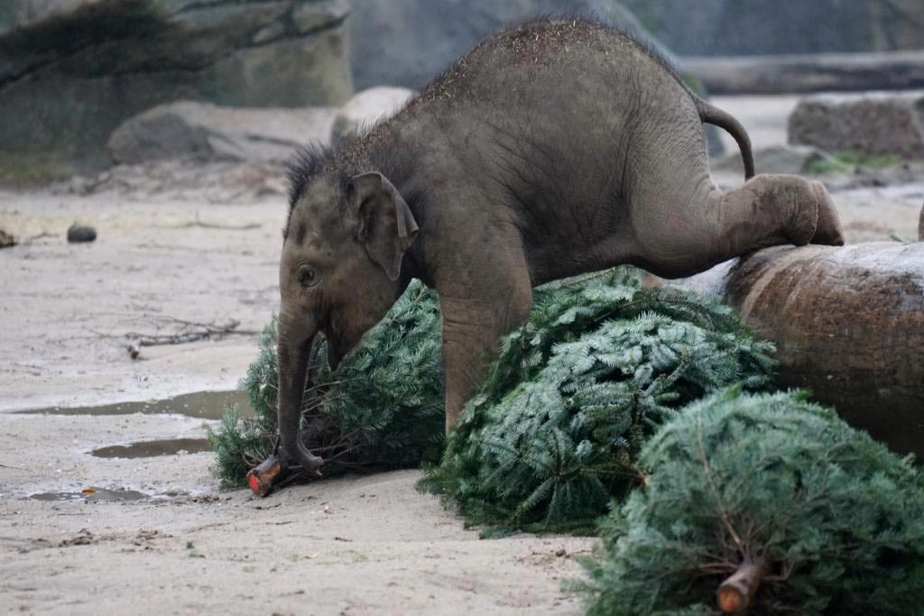 Das Warten auf das Christkind verkürzen: Kinder können kostenlos in den Kölner Zoo copyright: Werner Scheurer / Kölner Zoo