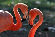 CityNEWS verlost eine Tour d´ Amour für ein verliebtes Pärchen am Valentinstag copyright: Kölner Zoo