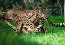 Mit CityNEWS auf Tour d' Amour am Valentinstag im Kölner Zoo gehen copyright: CityNEWS / Alex Weis