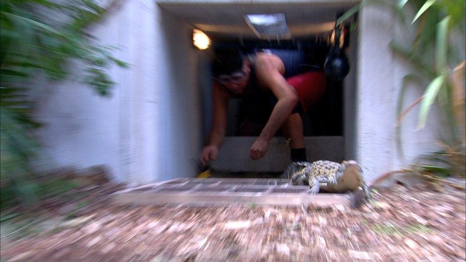 In diesem Tunnel befinden sich drei versteckte Sterne und ein Krokodil - was sofort Reissaus nimmt als Matthias den Tunnel betritt. Foto: MG RTL D