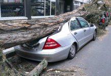 Unwetter-Bilanz in Köln: Sturm Friederike richtete viele Schäden an copyright: pixabay.com (Symbolbild)