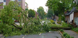 """Orkan """"Friederike"""" wütete in Köln und richtet Schäden in Millionenhöhe an copyright: pixabay.com (Symbolbild)"""