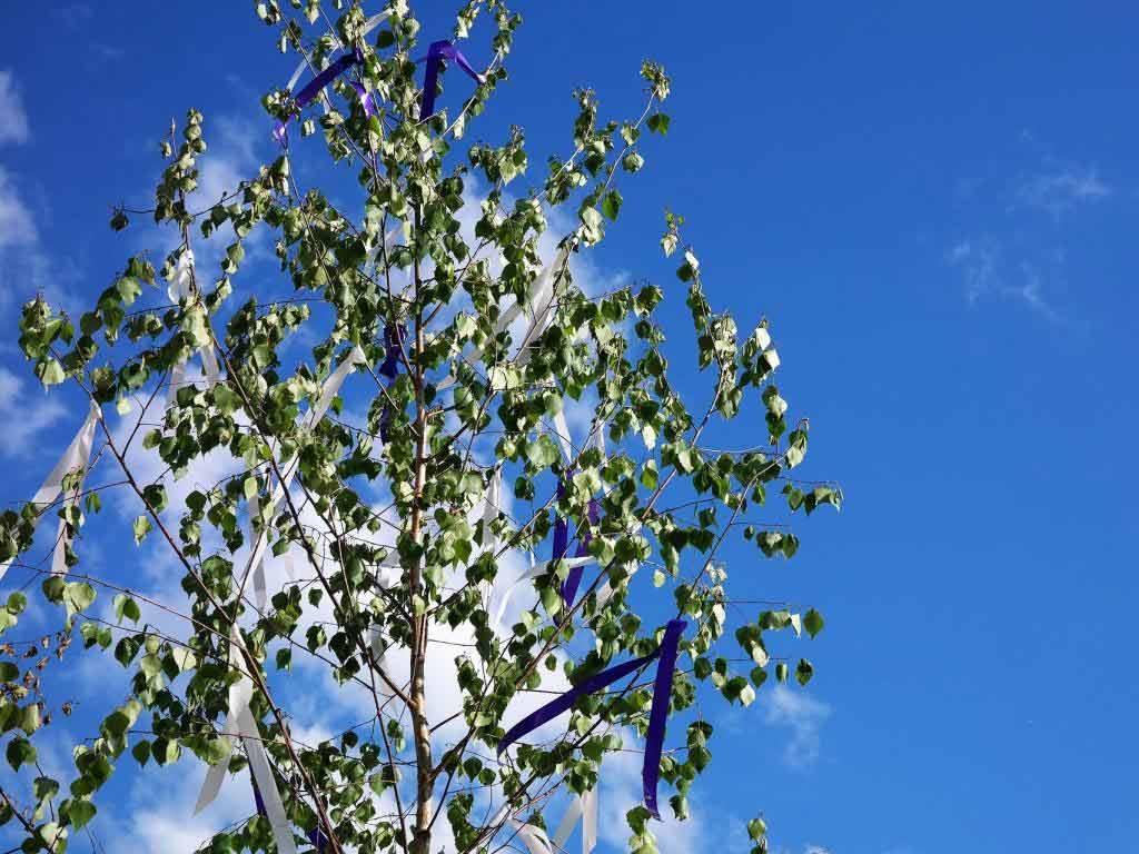 Kein städtischer Maibaumverkauf in diesem Jahr copyright: pixabay.com