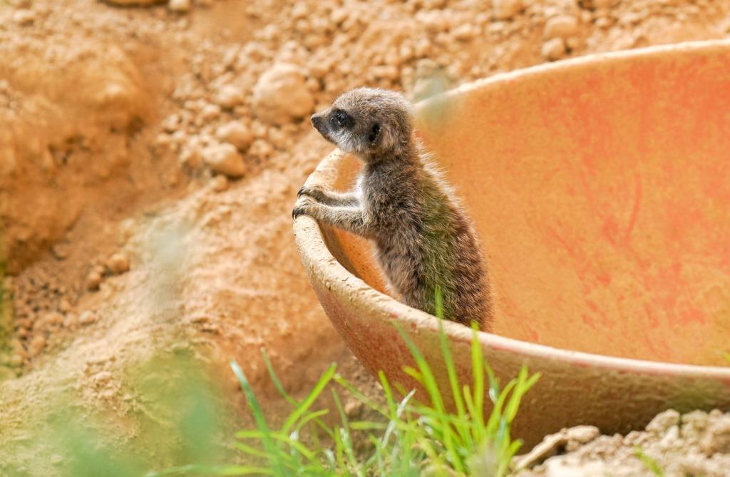 Zum Verlieben: Süßer Nachwuchs im Kölner Zoo copyright: Kölner Zoo / Werner Scheurer