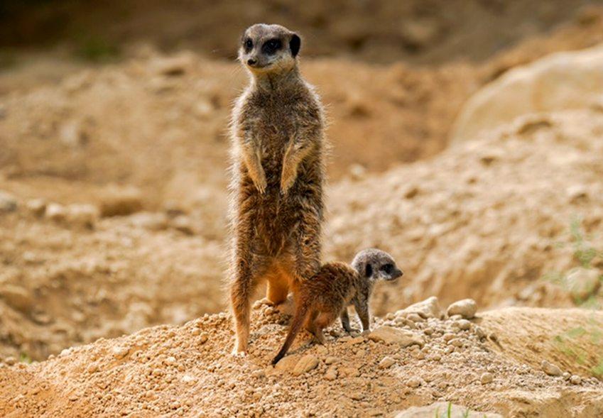 Süßer Nachwuchs in vorbildlicher Umgebung copyright: Kölner Zoo / Werner Scheurer