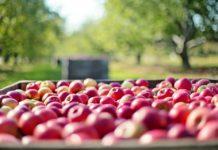 Lokale Bauernhöfe: Obst und Gemüse aus Köln und der Region copyright: pixabay.com