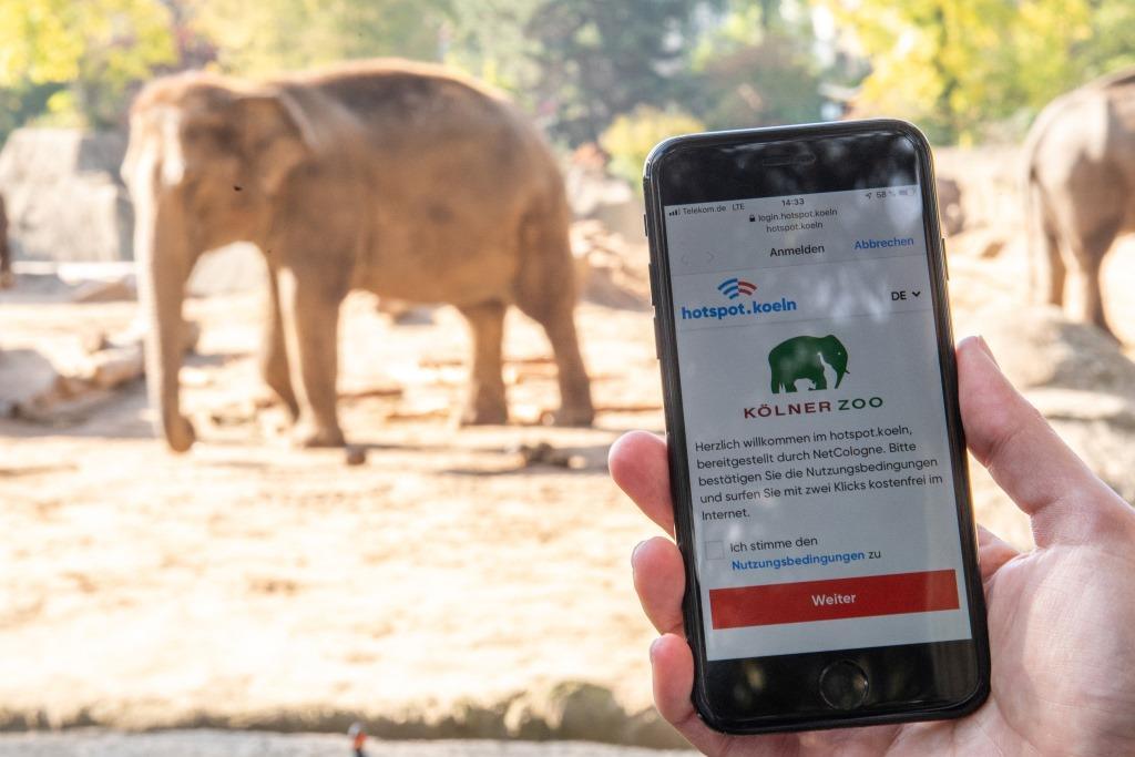 Ab sofort gibt es im Köln Zoo kostenloses WLAN. copyright: Marius Becker / NetCologne