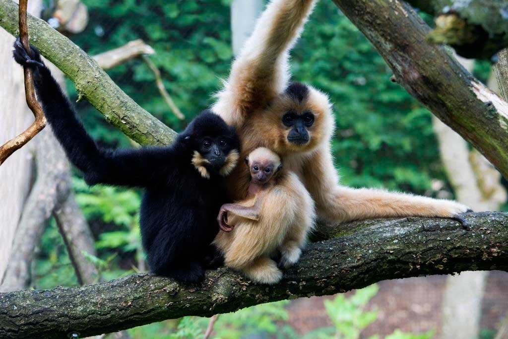 Gehen Sie auf tierische Entdeckungstour! copyright: Burger´s Zoo