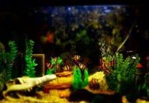 Gewinnspiel für Aquarium-Fans: Tauchen Sie mit CityNEWS in das Hobby Aquaristik ein copyright: pixabay.com