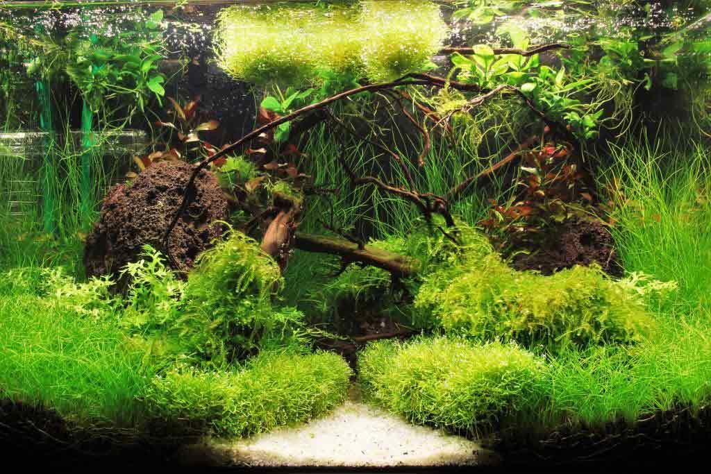 Für die Innengestaltung des Aquariums gibt eine Vielzahl an Möglichkeiten. copyright: Daniel Walter / Aquaristik Deko