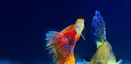 CityNEWS verlost eine Moorkienwurzel und eine CO2-Anlage für Aquaristik-Fans copyright: pixabay.com