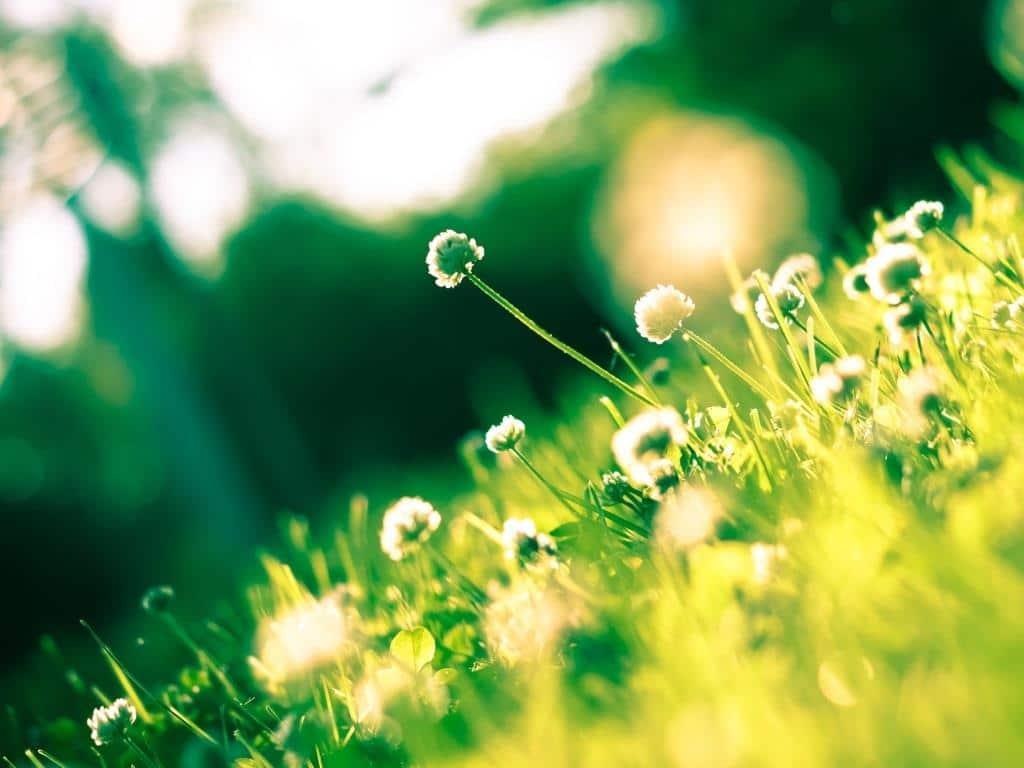 12.000 Pflanzenarten im Botanischen Garten copyright: pixabay,com