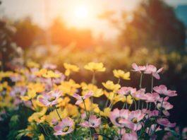 Gardening 2019: Was ist dieses Jahr Trend und im Garten angesagt? copyright: pixabay.com