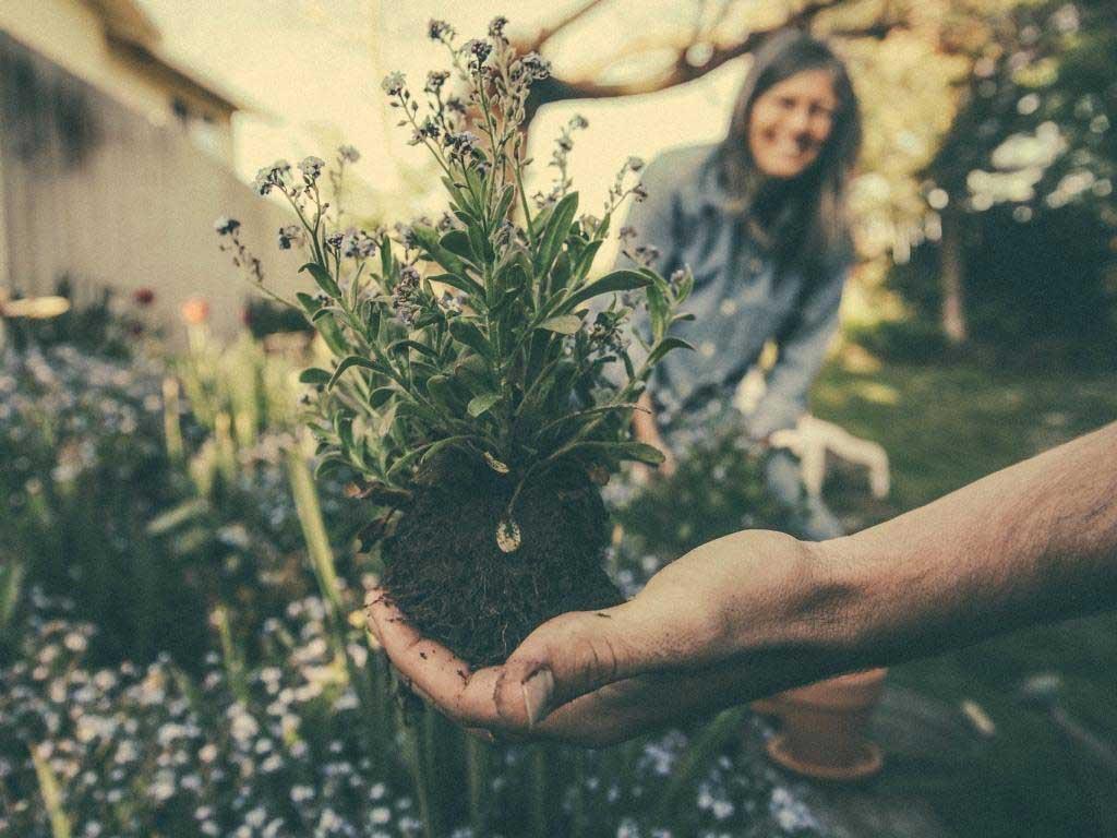 Die Trends im Garten 2019 copyright: pixabay.com