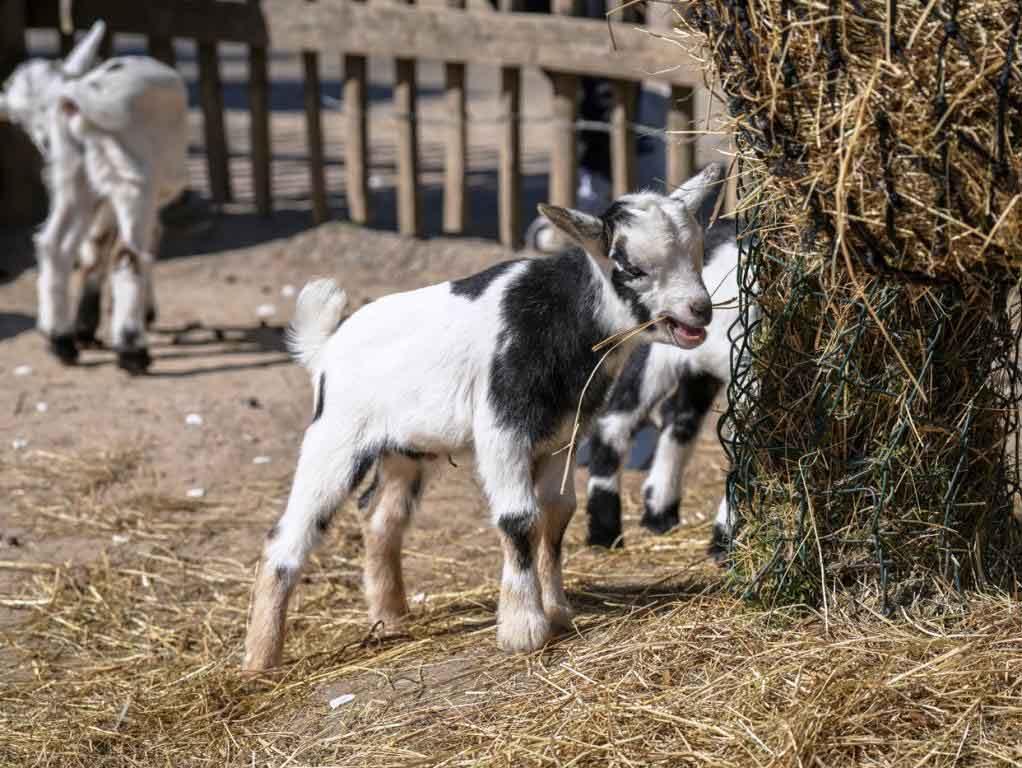Tierischer Nachwuchs pünktlich zu Ostern im Kölner Zoo