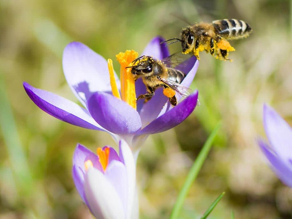Der Garten als Wohlfühloase für nützliche Insekten copyright: Envato / manfredxy