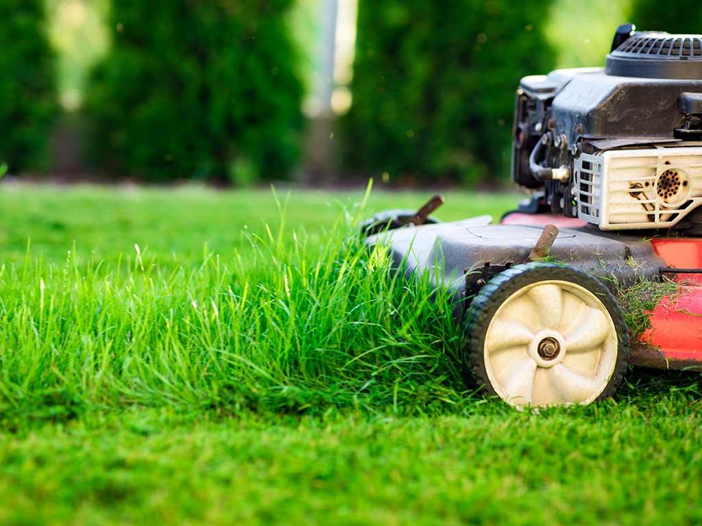 Der gepflegte Rasen copyright: Envato / mblach
