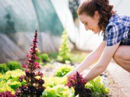 Trend Urban Gardening: Hier können Sie in Köln mitmachen! copyright: Envato / nd3000