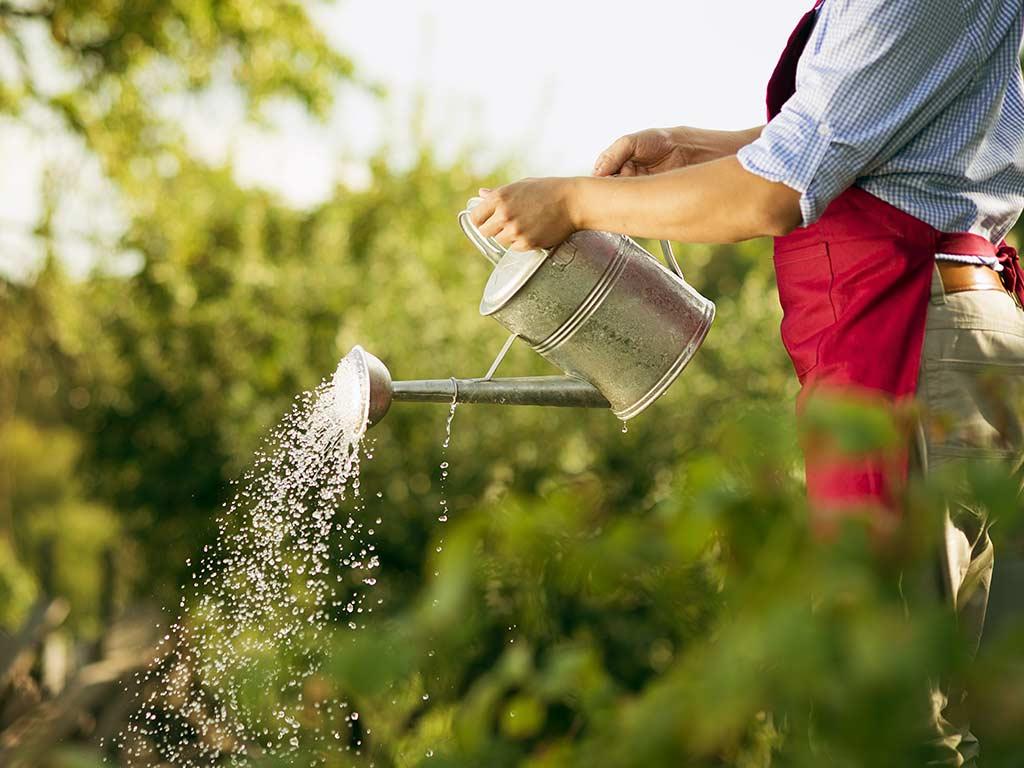 Neue Pflanzen gut wässern und stützen copyright: Envato / halfpoint