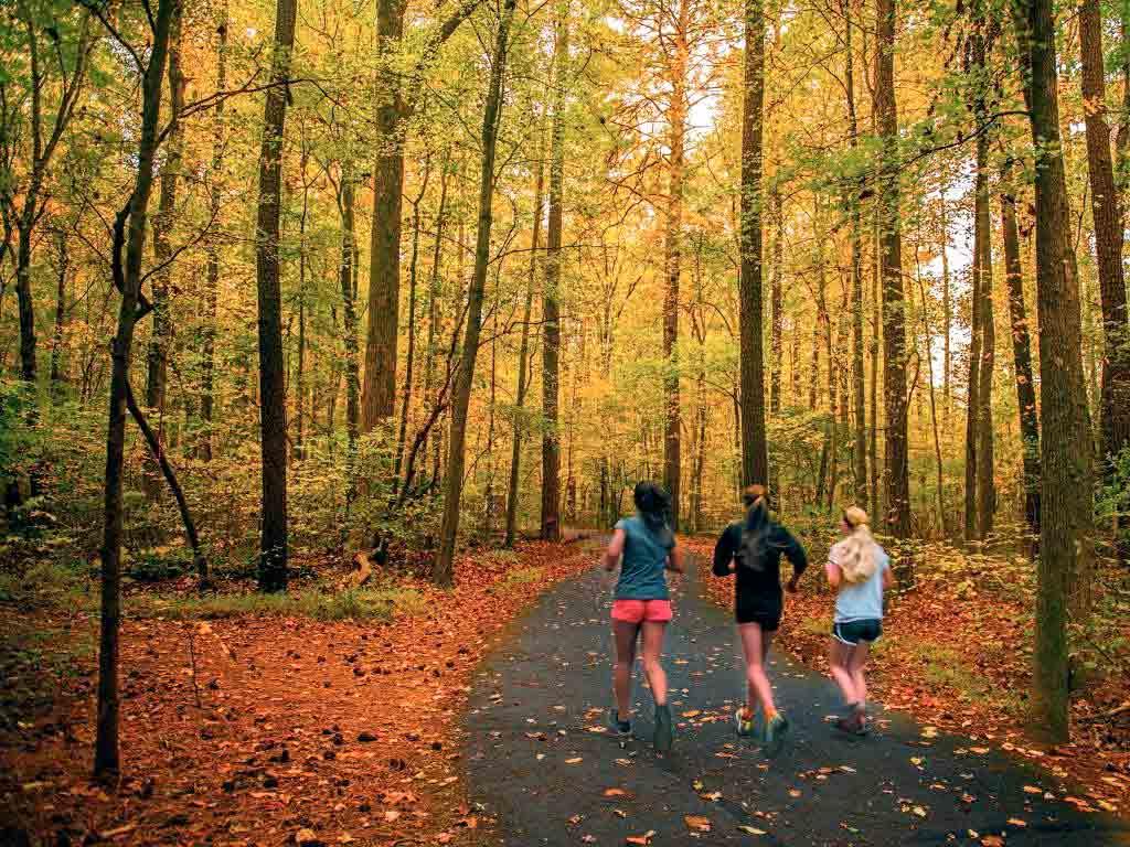 Die Laufstrecke wechselt zwischen Stadt und Wald und ist daher besonders abwechslungsreich. copyright: Envato / pazham