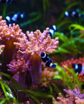Das Kölner Aquarium: Eine moderne Arche Noah copyright: CityNEWS / Alex Weis