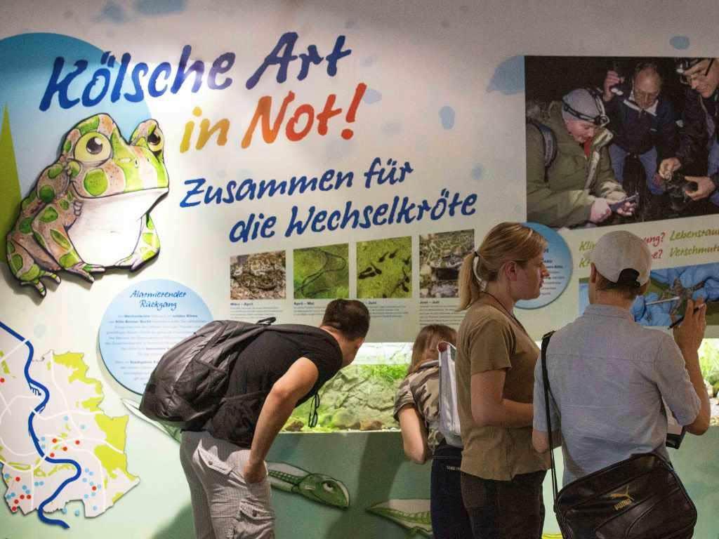 Engagement wird in der Ausstellung zur Wechselkröte vor Ort erlebbar copyright: CityNEWS / Alex Weis