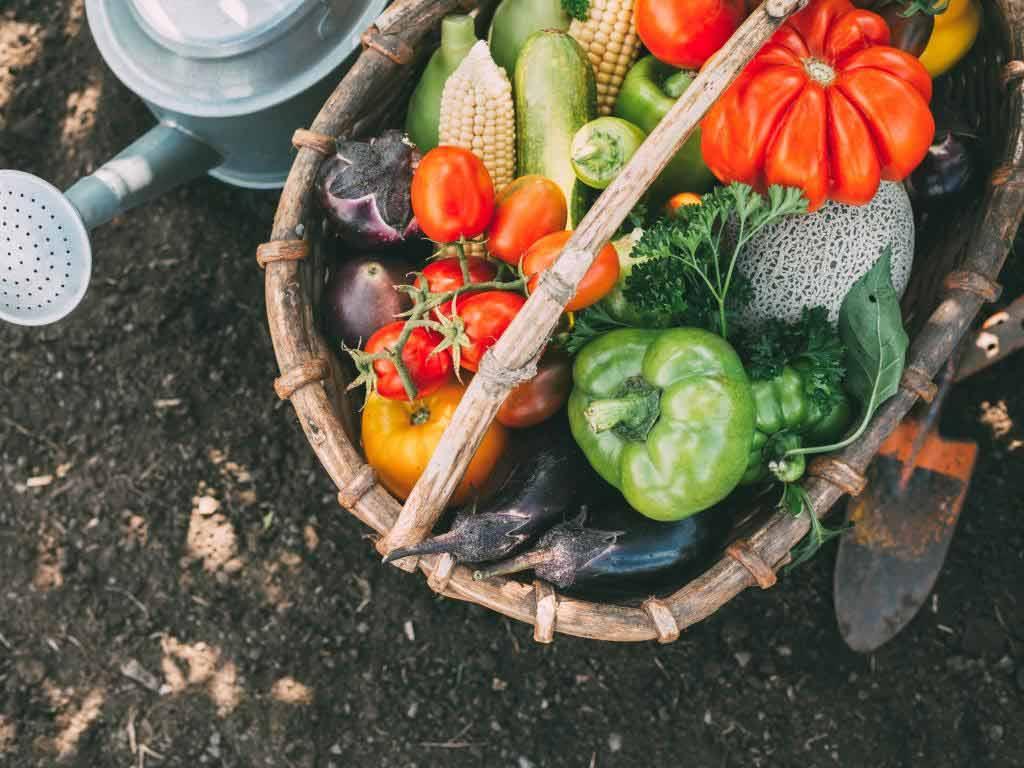 Bio-Lebensmittel immer angesagter copyright: Envato / Vell