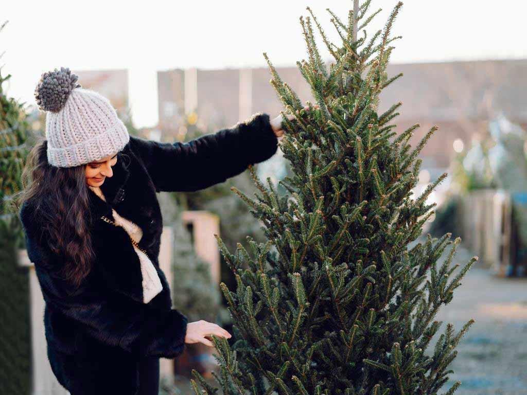 Den passenden Weihnachtsbaum zur Adventszeit aussuchen. copyright: Envato / prostooleh