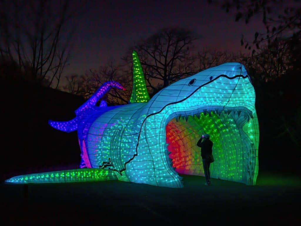 Beim China Light Festival im Kölner Zoo warten tierische Highlights. copyright: CityNEWS