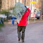 Weihnachtsbäume aus nachhaltigem Anbau vom Beller Hof in Köln-Marsdorf copyright: Beller Hof