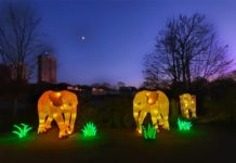 Mit CityNEWS zum China Light Festival in den Kölner Zoo copyright: CityNEWS