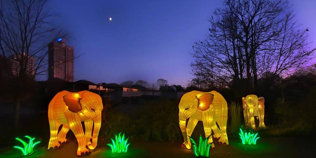 Verlosung: Mit CityNEWS zum China Light Festival in den Kölner Zoo