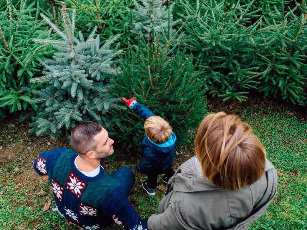 Zum perfetem Weihnachtsfest gehört auch der passende Tannenbaum. copyright: Envato / jpozzi