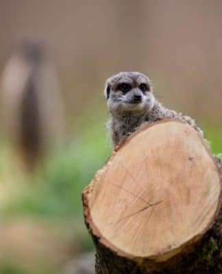 160 Jahre Kölner Zoo: Eine tierisch bewegte Zeit copyright: CityNEWS / Alex Weis