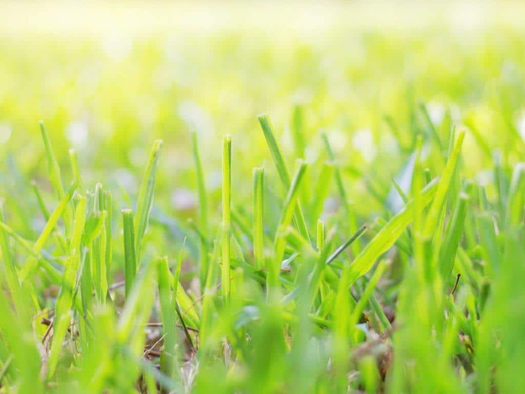 Nach den Winterwochen verdient der Rasen eine umfassende Kur. copyright: Envato / RK 1979